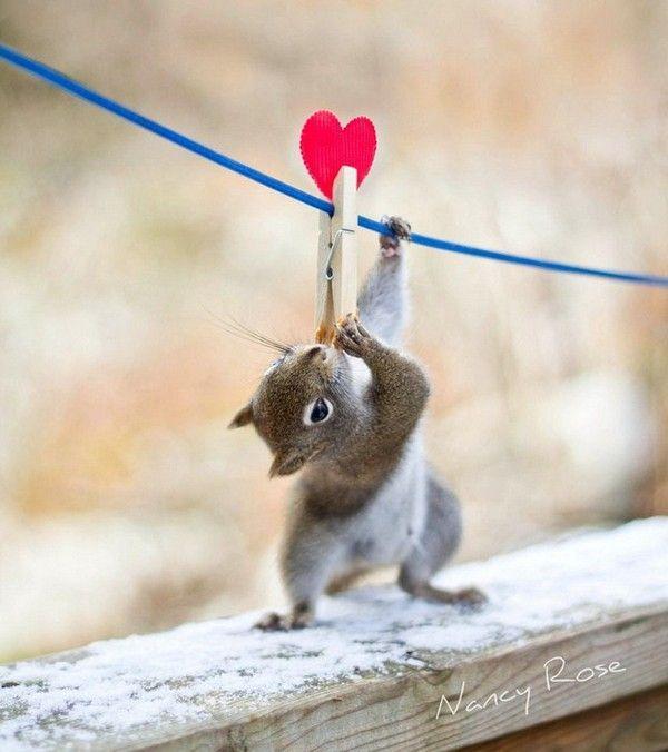 Ecureuils epingle et coeur